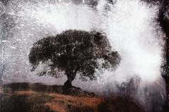Tree Emanations III, 2020-CA