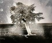 Tree Emanations, 1994