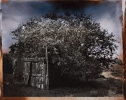 Shed Under Tree, 1996
