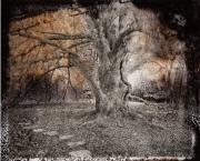 Beech Tree 1, 2014